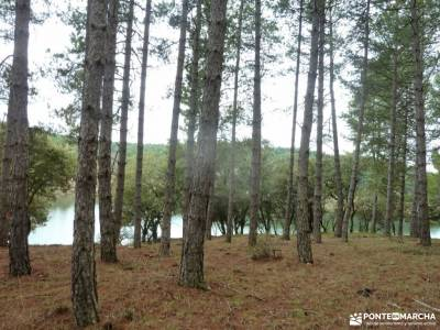 Casa del Bosque,Fortines Buitrago de Lozoya; ajustar mochila arbol taxaceo fotos de la sierra de caz